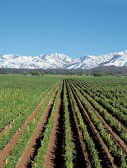 catena-Vineyards