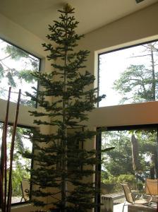 new-tree-set-on-stump