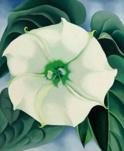 Jimson Weed White Flower No. 1