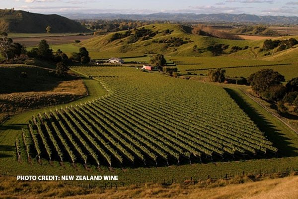 BEYOND SAUVIGNON BLANC – PRIME TIME FOR PINOT NOIR IN NEW ZEALAND