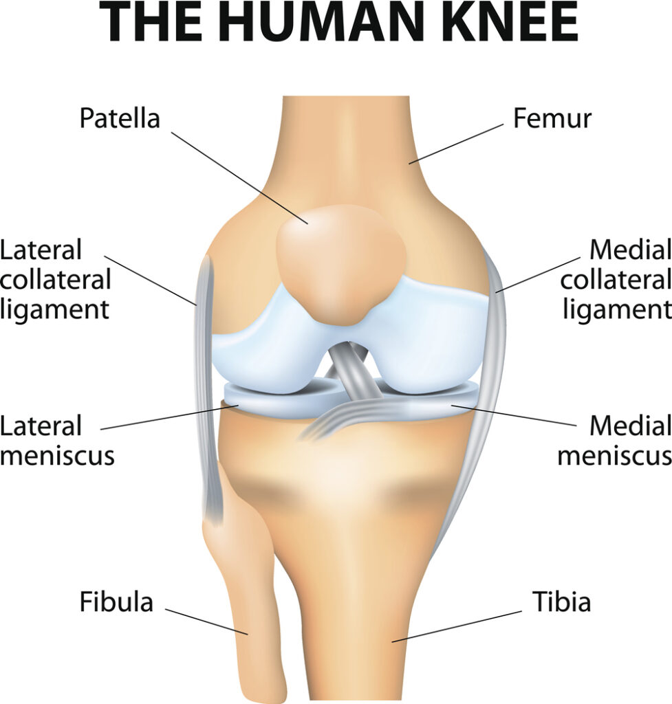 Popping in your knee
