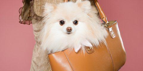 handbag styles