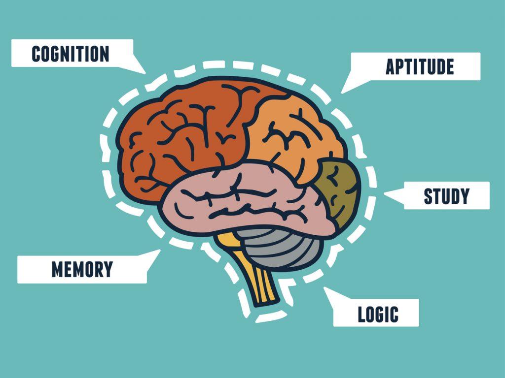 Human Brain Capabilities