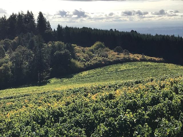 Willamette Valley Courtesy of Tricia Conover, GrapeStone Concepts