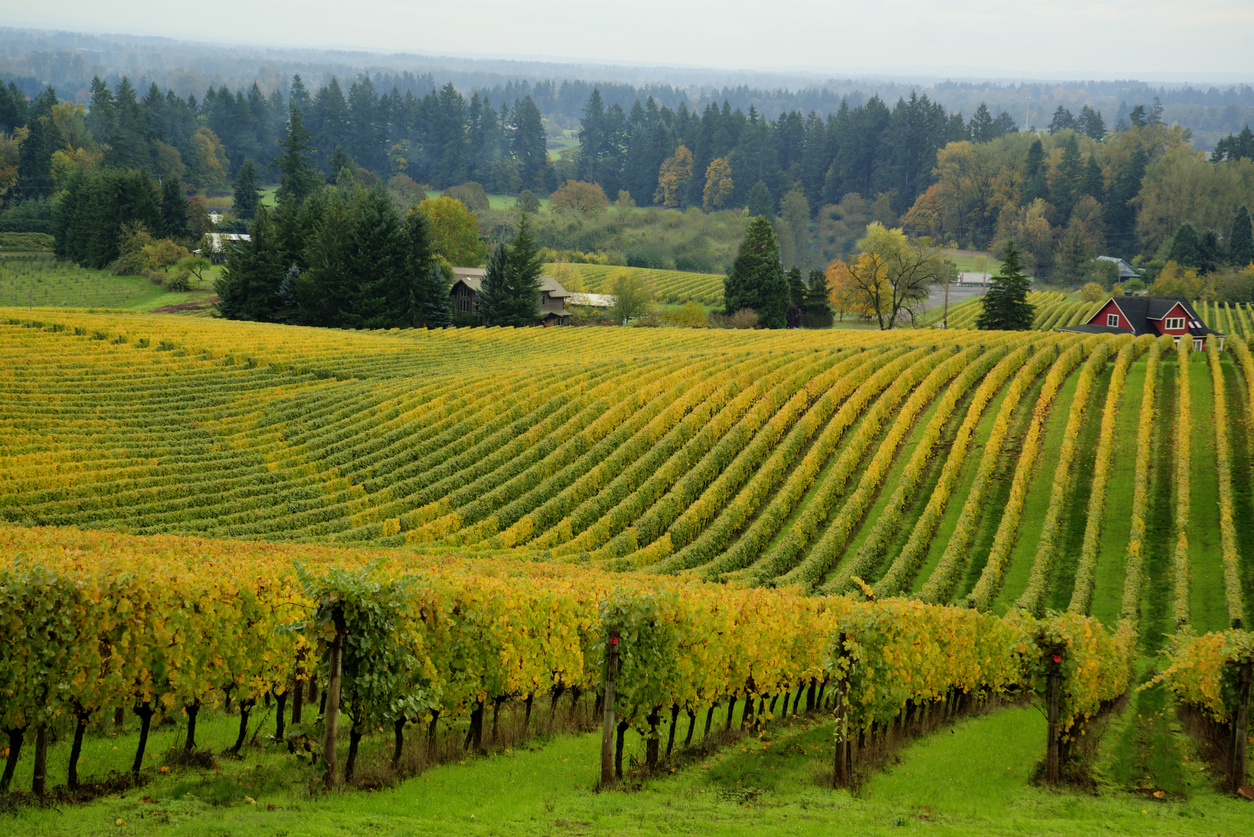 Willamette Valley Feature