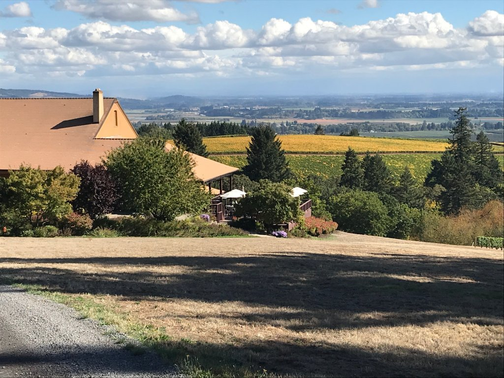 View at Domaine Drouhin courtesy of Tricia Conover, GrapeStone Concepts