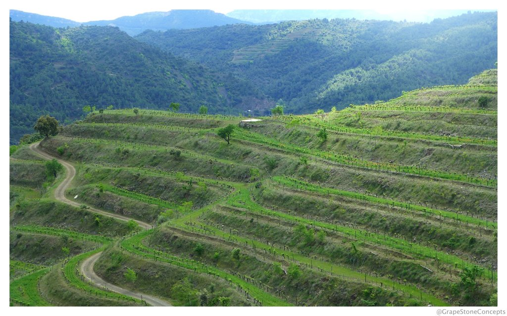 Priorat terraced vineyards 2014