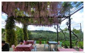 Priorat wisteria covered patio clos figueras 2014