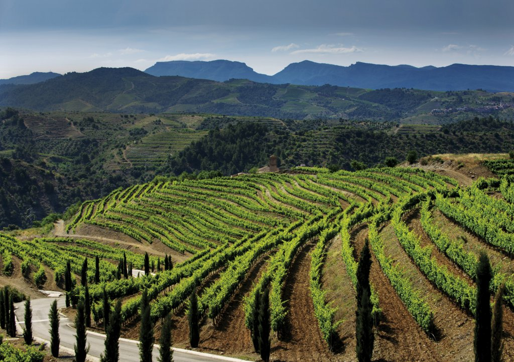 Torres Priorat Vineyards