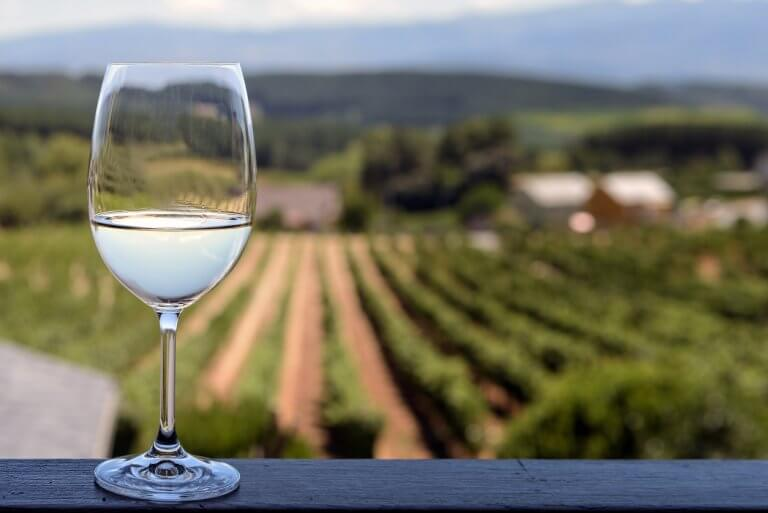 CELEBRATE SAUVIGNON BLANC WINE