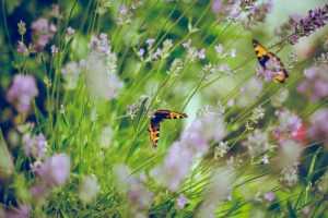 Butterflies and other pollinators experience the health benefits of gardening organically, too