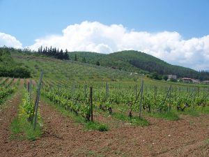 The vineyards in Greece provide some of the best Mediterranean wines.