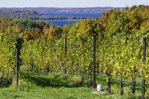 There are plenty of wineries and breweries to visit in Michigan