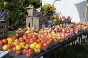 Sample the fresh Apples, cherries and around traverse city