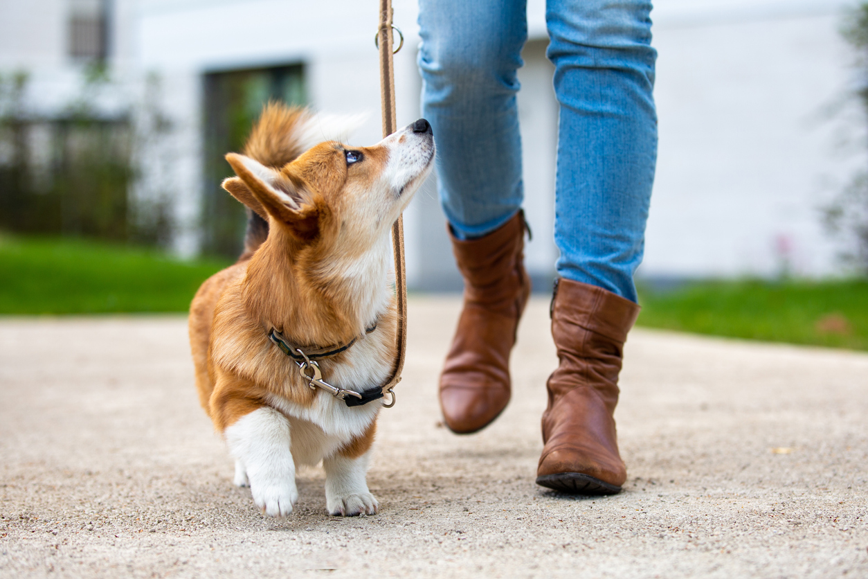 Pet or house sitting can be a great flexible career for women over 50