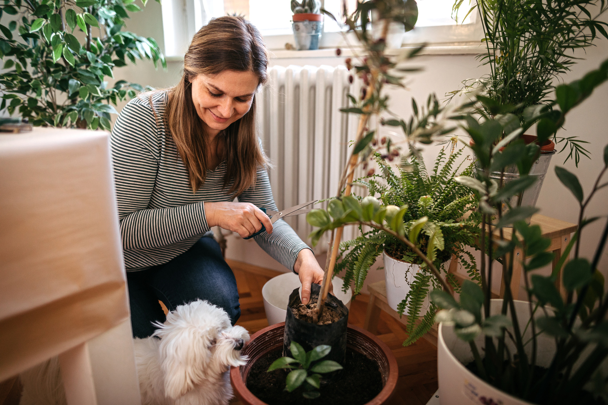 woman planting houseplants