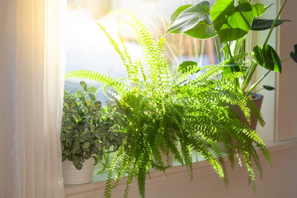 Boost Your Brain Health With Indoor Plants | PrimeWomen