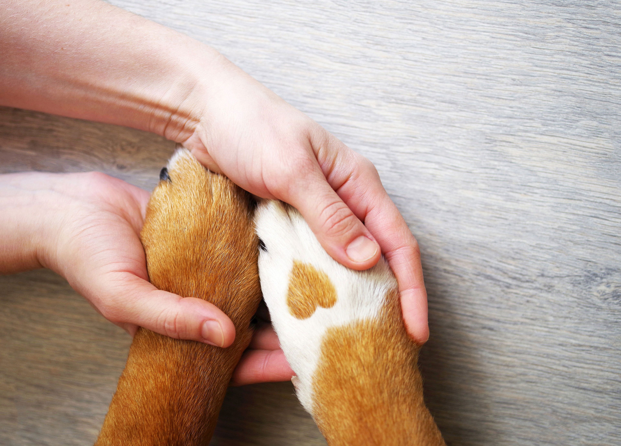 stages of grief after pet loss