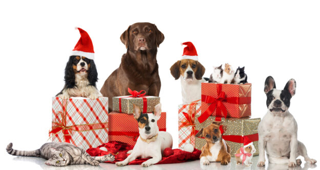 Animals with gifts - gifts for pets and pet lovers