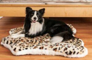 PupRug™ Animal Print Memory Foam Dog Bed - Cheetah Faux Print