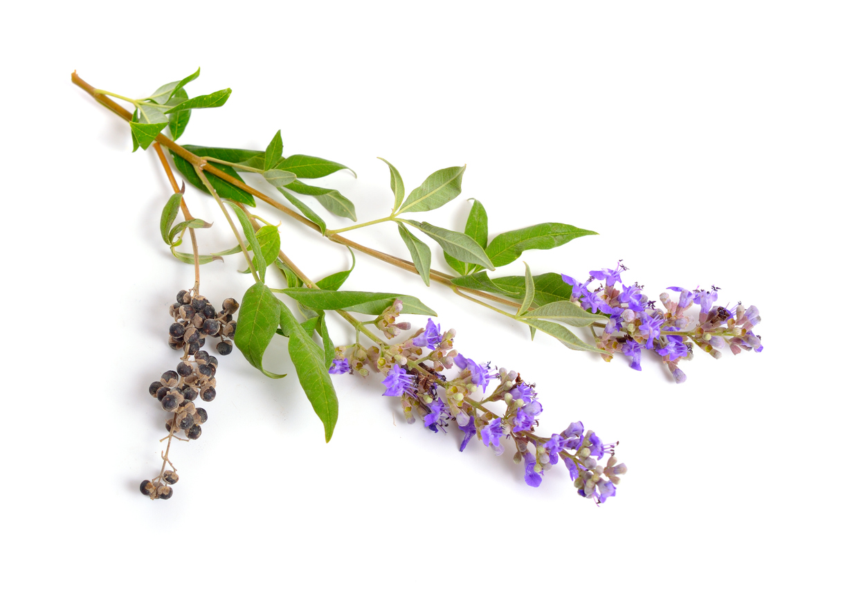 Chasteberry herbs and supplements for menopause.