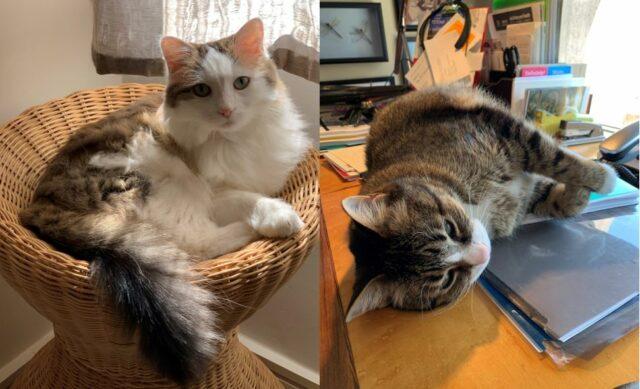 Chris Koski's cats Dot and Dash