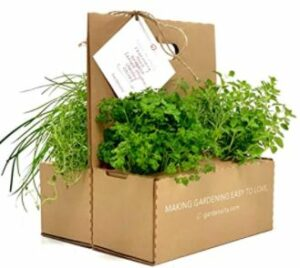 Gardenuity Herb Collection
