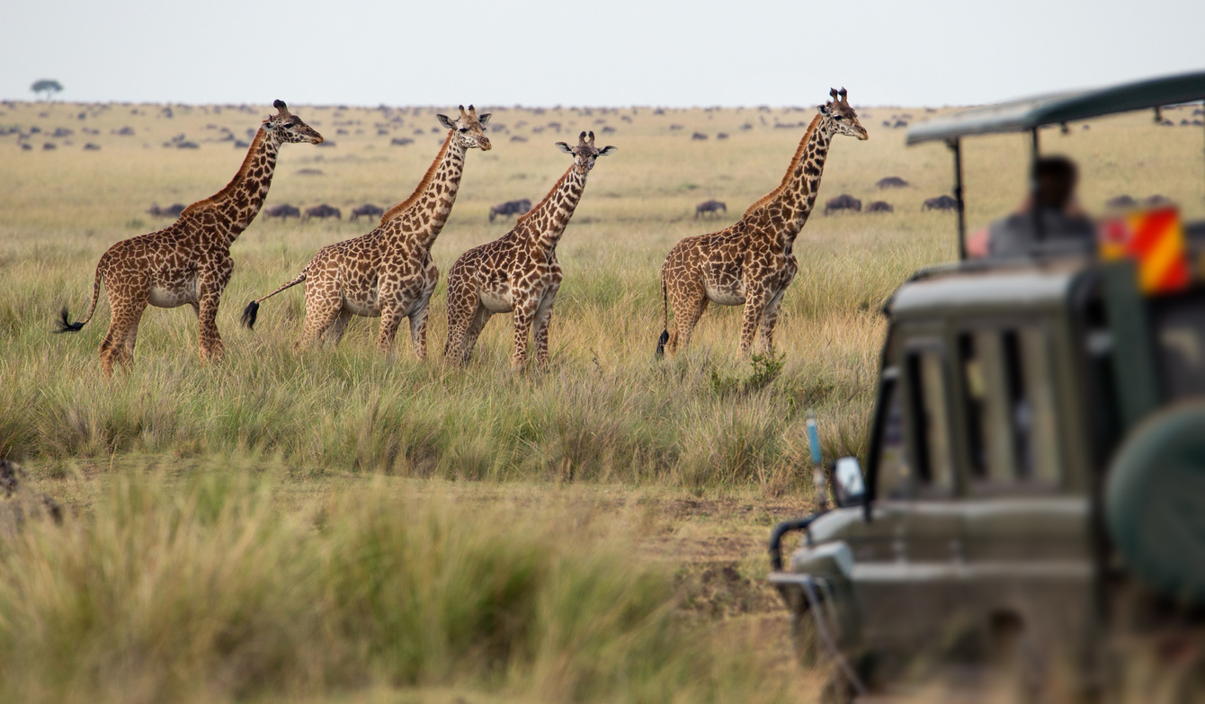 Plan your next trip, maybe a safari