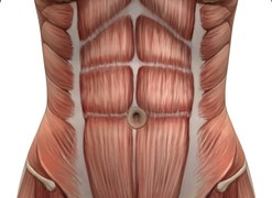 Strengthen your core abdominal muscles