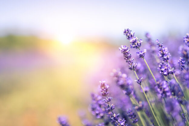 Benefits of aromatherapy when using lavender